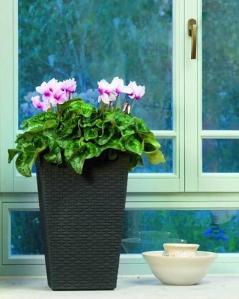 ArtRoja ArtRoja Rattan planter S - hnedý